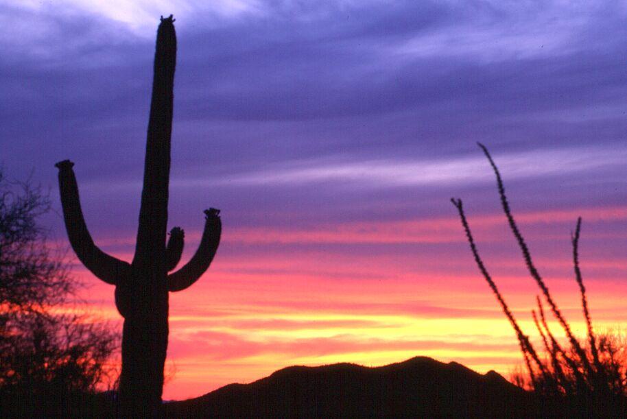 Sonnenuntergang in der Saguaro-Desert (Arizon)