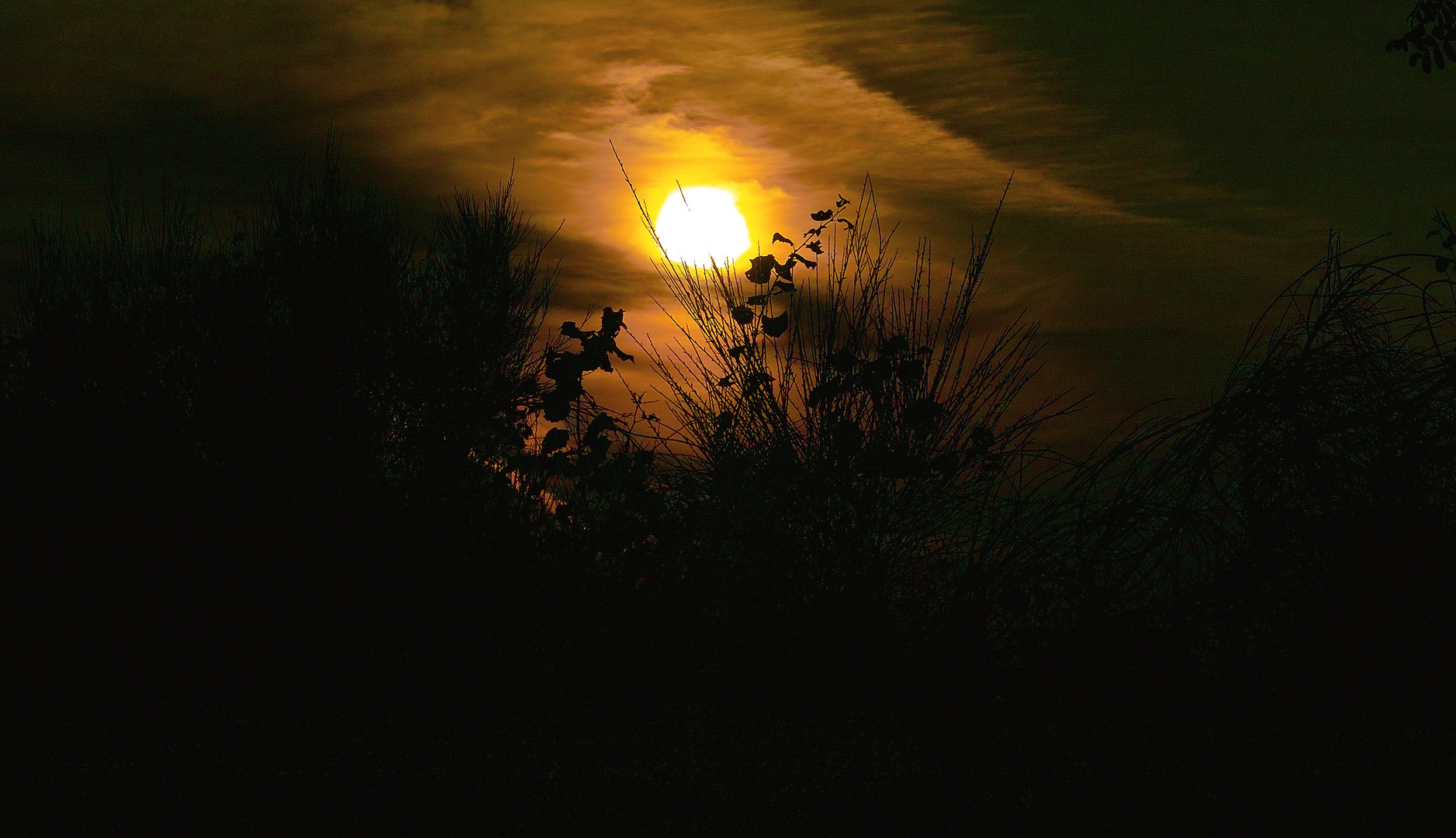 Sonnenuntergang in der Wahner-Heide