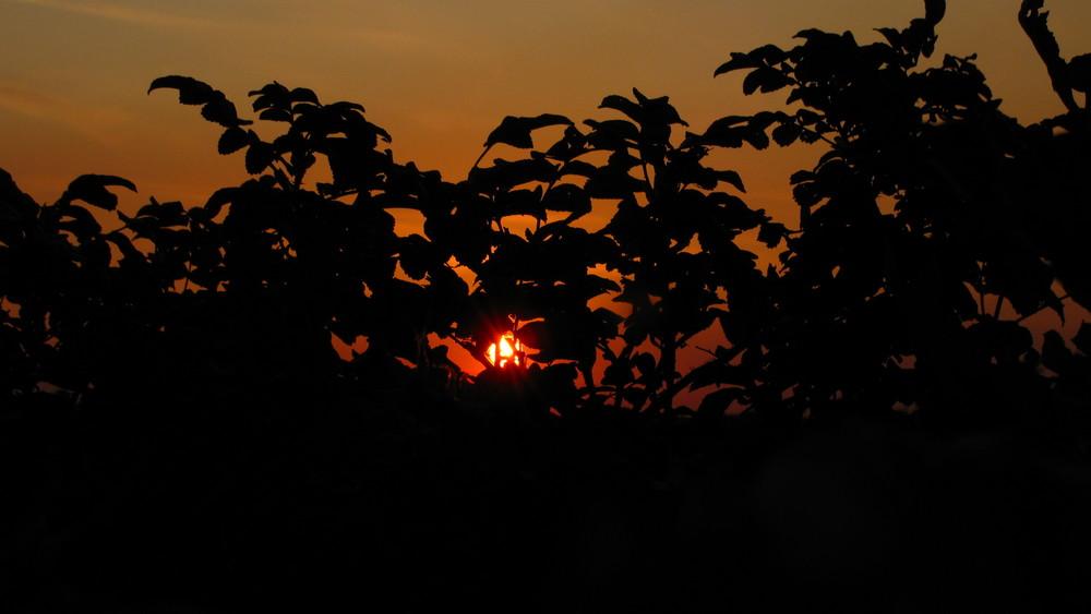 Sonnenuntergang in Genhülsen II
