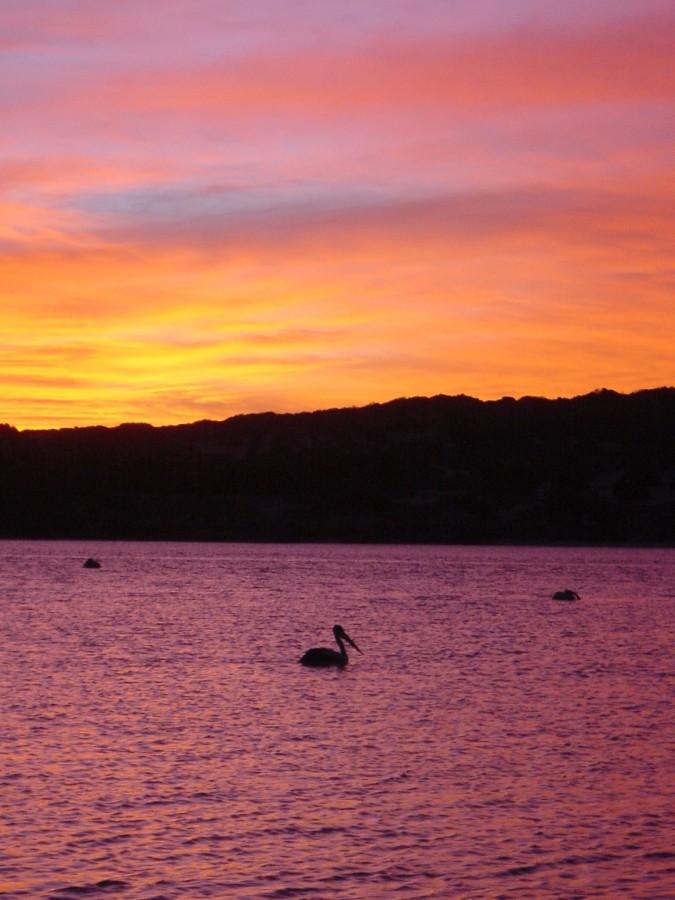 Sonnenuntergang in Kalbarri mit Pelikan *reloaded*