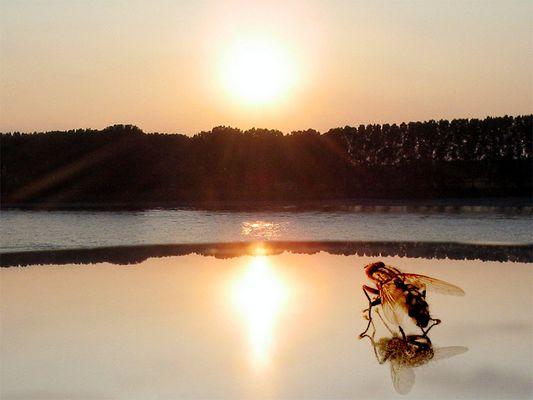 Sonnenuntergang in Monheim am Rhein