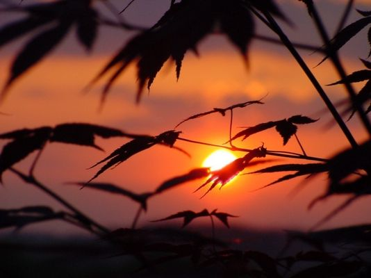 Sonnenuntergang in Oberösterreich