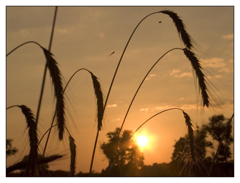 sonnenuntergang in polen