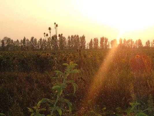 Sonnenuntergang in Rumänien