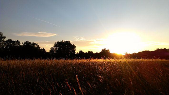 Sonnenuntergang in Stuttgart - Rosensteinpark