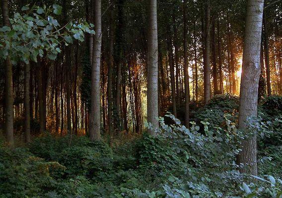 Sonnenuntergang in Wald