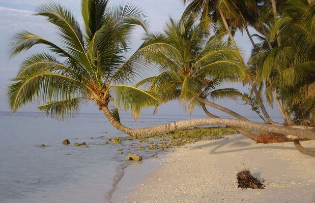 Sonnenuntergang - Malediven Januar 2006