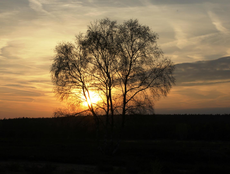 Sonnenuntergang Mehlinger Heide