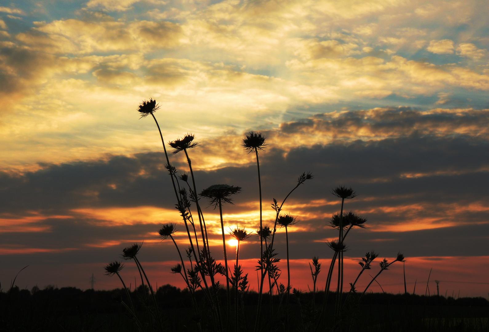 Sonnenuntergang mit blumigem Schattenspiel