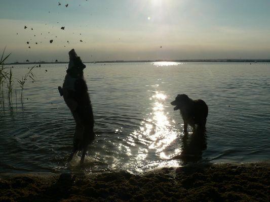 sonnenuntergang mit hunden