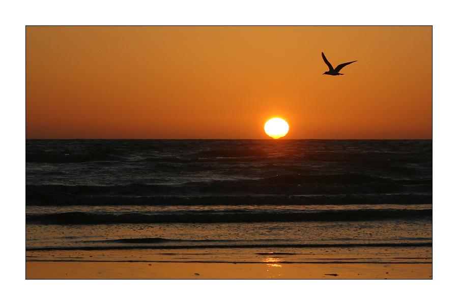 Sonnenuntergang mit Möwe #2