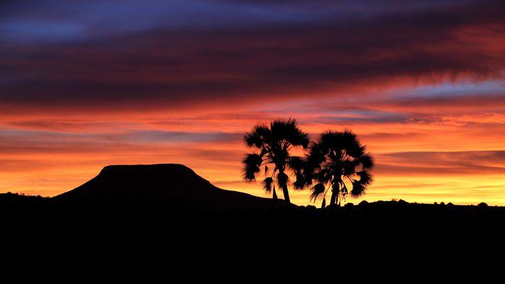 Sonnenuntergang mit Palmen | Africa