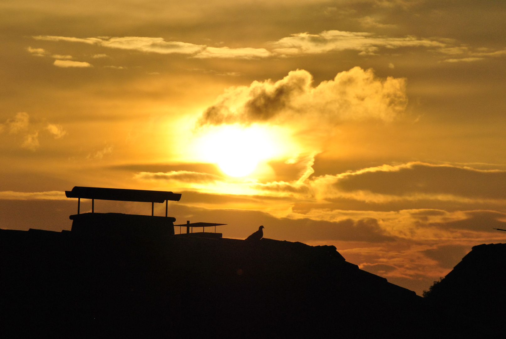 Sonnenuntergang mit Taube