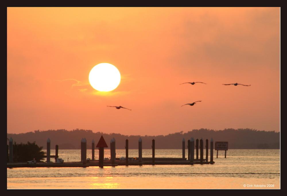 Sonnenuntergang mit Vögeln in Everglades City