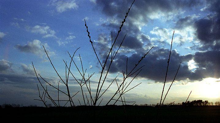 Sonnenuntergang mit Weidenkätzchen