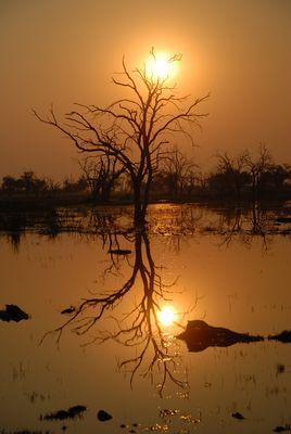 Sonnenuntergang Moremi - Botswana