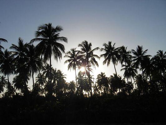 Sonnenuntergang + Palmenwald
