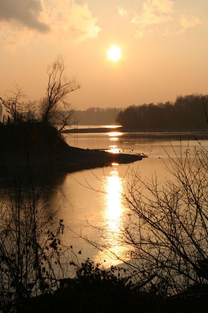 Sonnenuntergang Speyer Altrhein