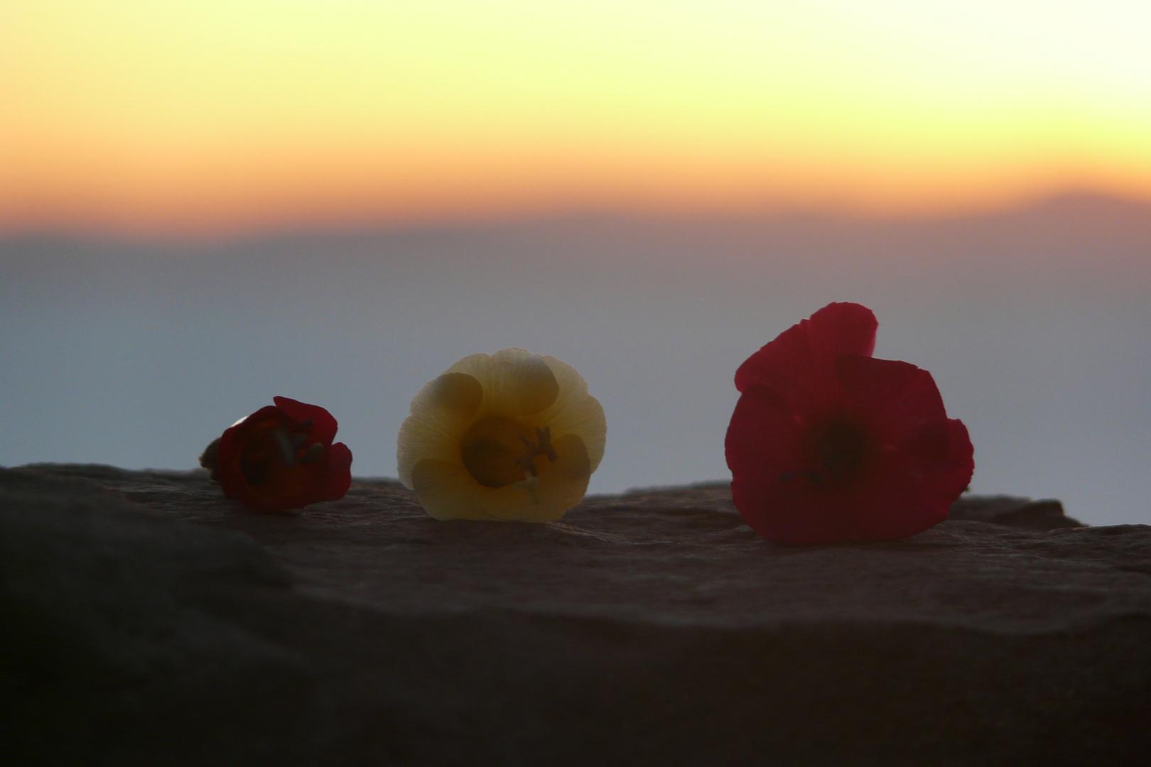 Sonnenuntergang Taquile Flor de Cantuta