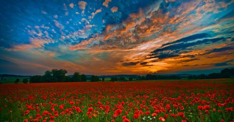Sonnenuntergang über dem Mohnfeld