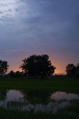 Sonnenuntergang über dem Reisfeld