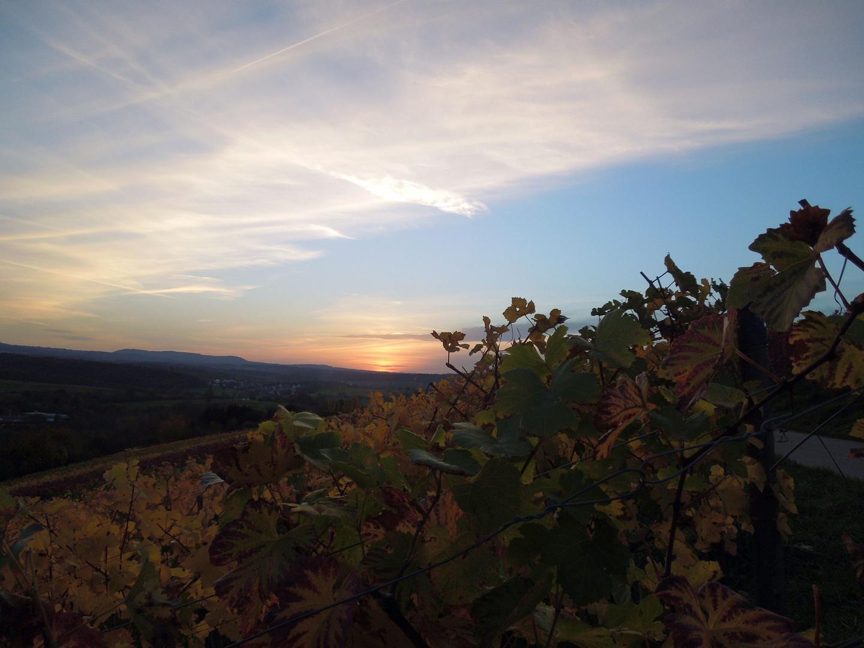 Sonnenuntergang über dem Weinberg