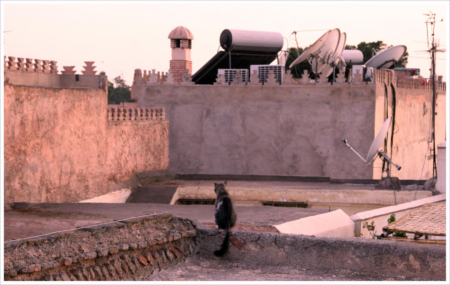 Sonnenuntergang über den Dächern von Marrakech