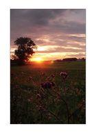 Sonnenuntergang Usedom, Nahe Stettiner Haff