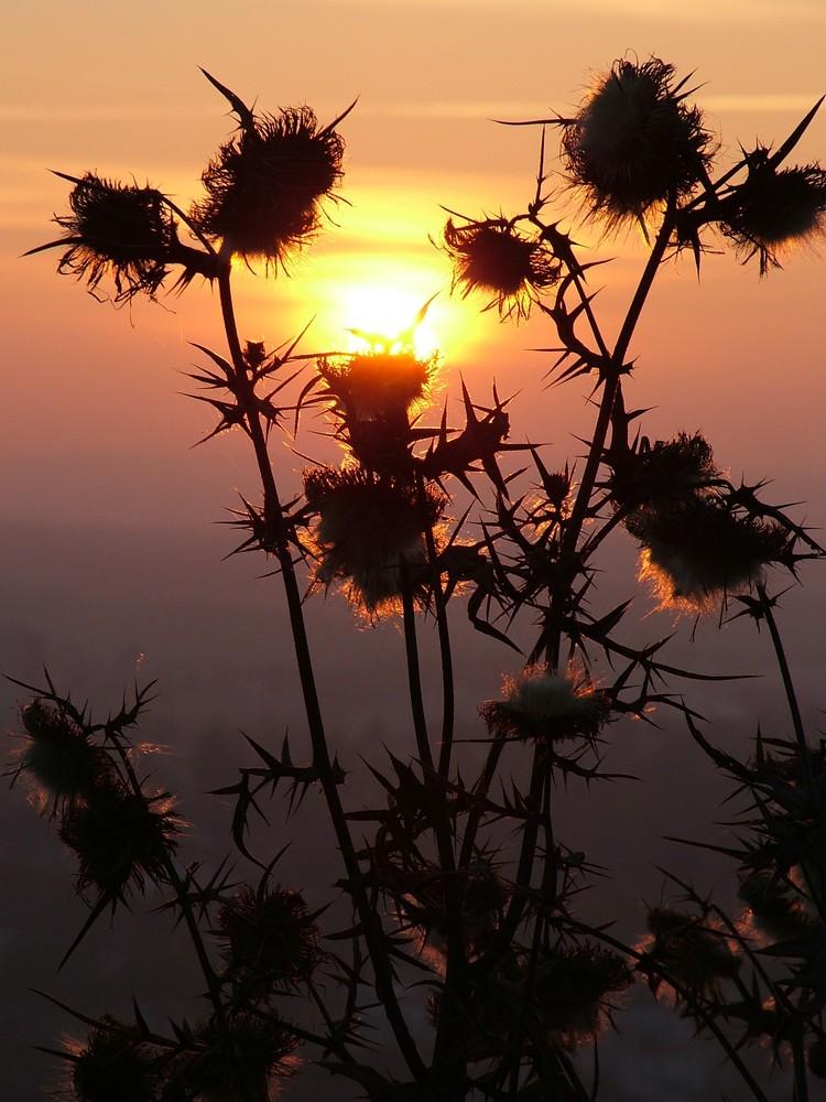 Sonnenuntergang von der Achalm bei Reutlingen