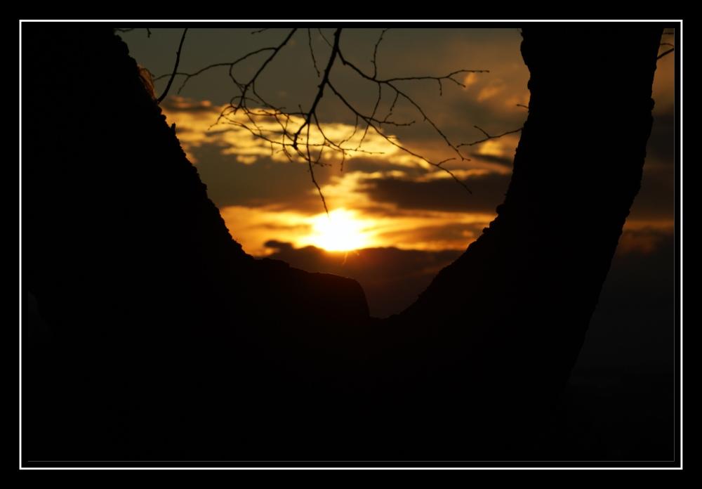Sonnenuntergang zwischen Baumgabel