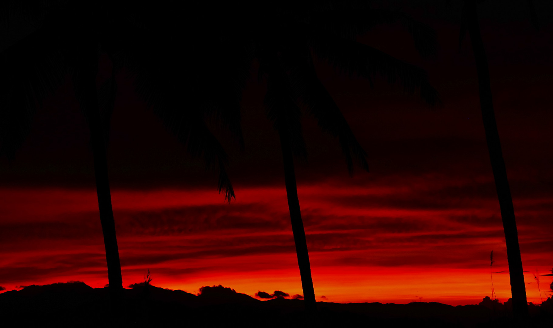 """ Sonnenuntergang zwischen den Palmen "" , Ibajay - Aklan - Panay 2009"