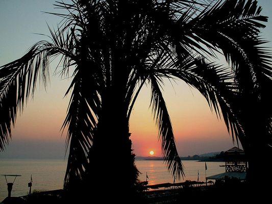 Sonnenuntergang zwischen Palme