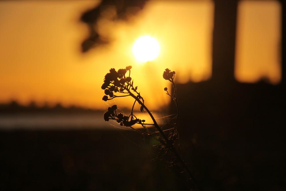 Sonnenuntergang_Emmerich am Rhein