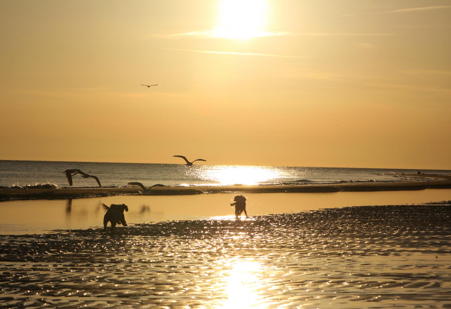 Sonnenuntergangsstimmung am Strand von Burgh Haamstede
