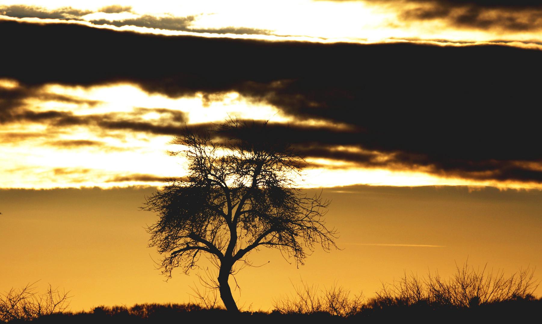°°°° Sonnenunterganguntergang am Hoystorfer Berg bei Uelzen °°°°