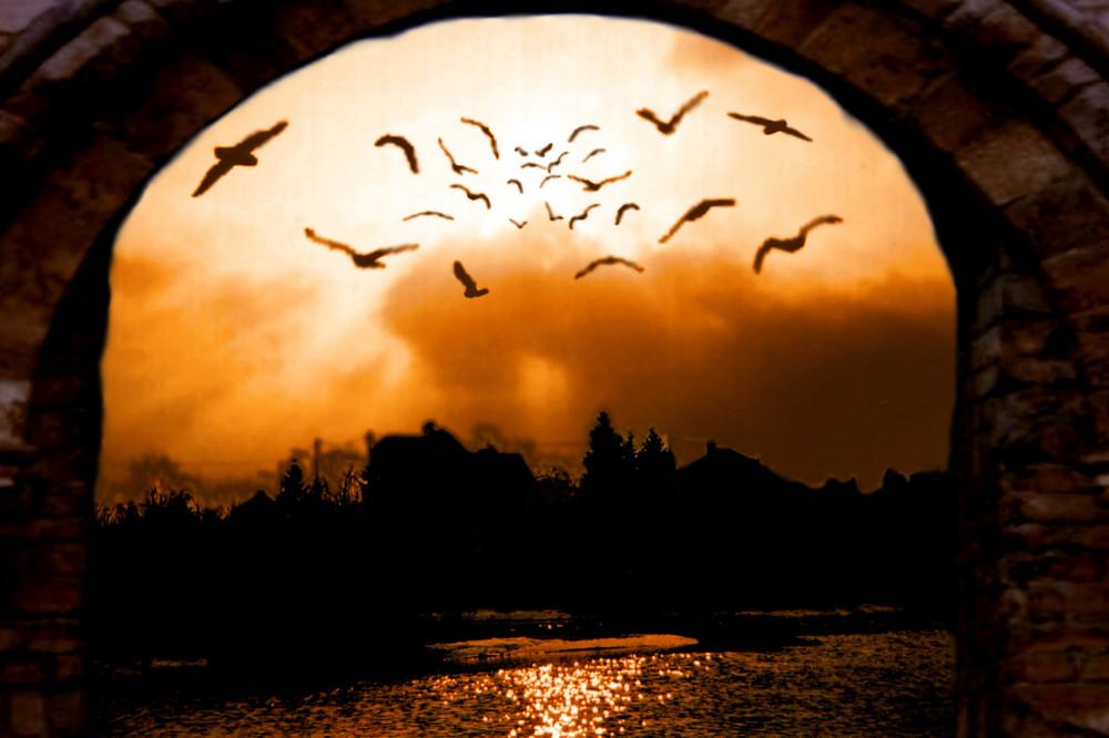 Sonnenvögel
