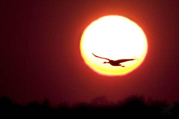 Sonnenvogel
