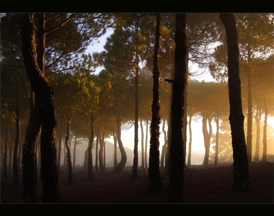 sonneunterbäumenuntergang...