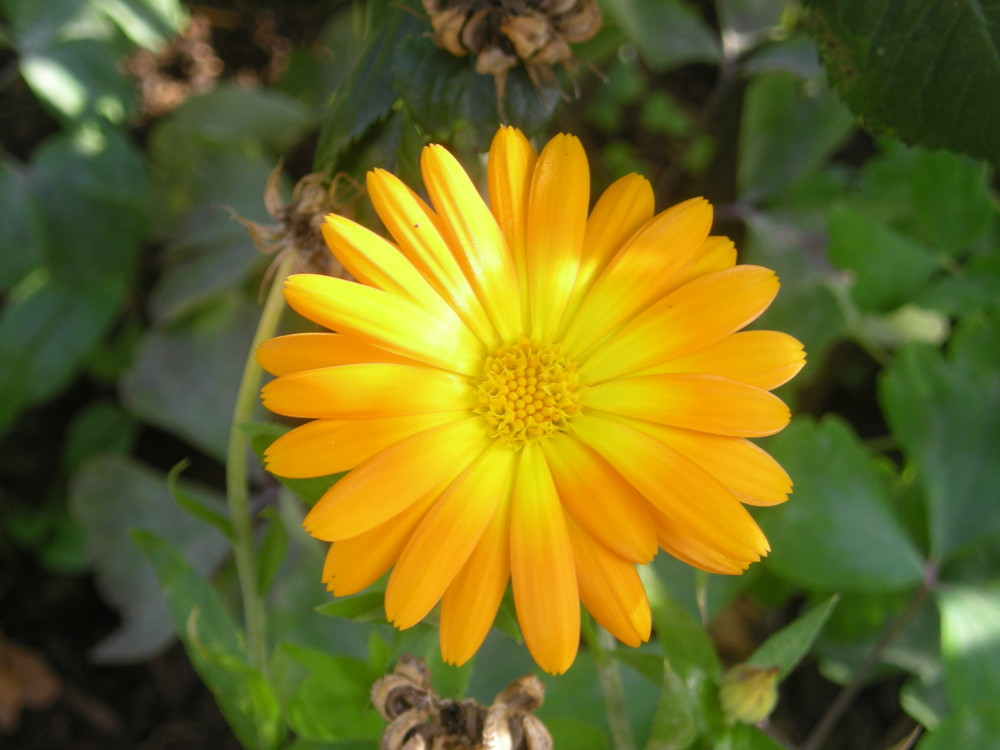 Sonnig gelb