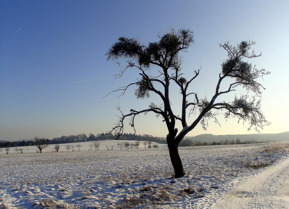 Sonnig und kalt .....