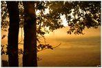 ...sonnige Aussichten morgens im Nebel...