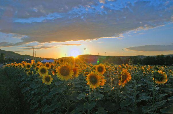 Sonnige Blumenzeiten - Blumige Sonnenzeiten