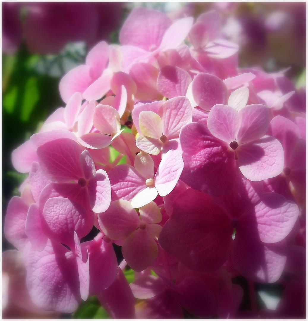 Sonnige Mittwochsblümchen