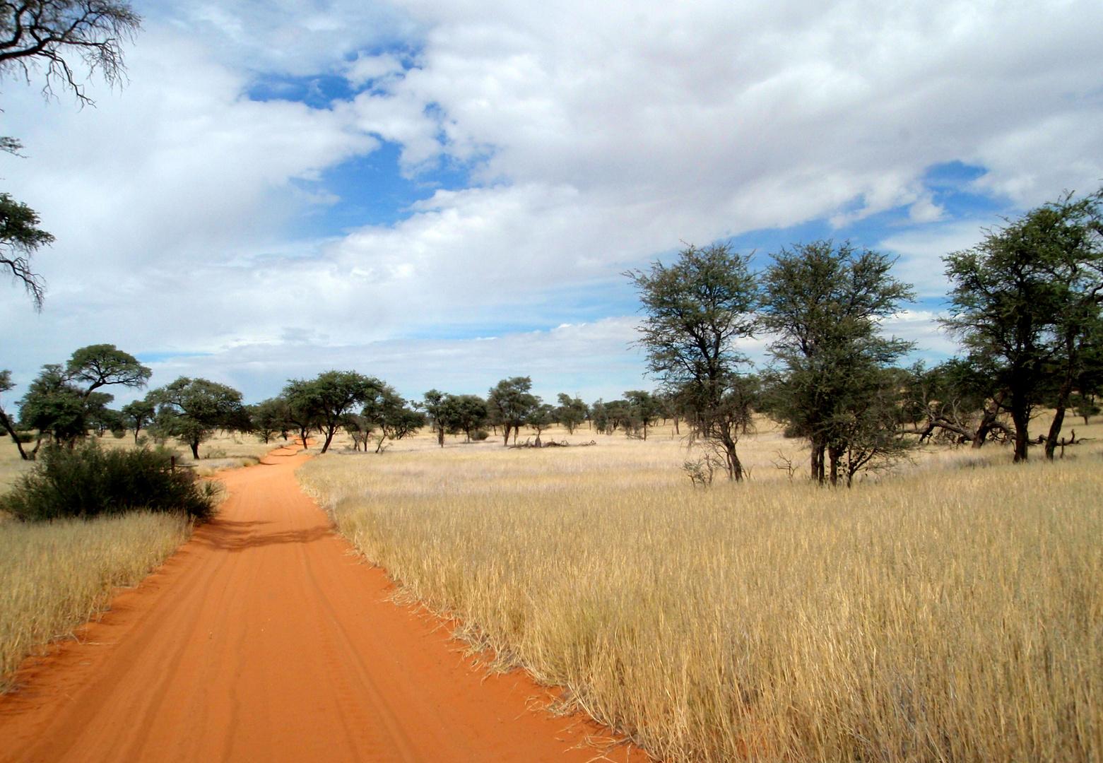 ... sonnige Stimmung in der Kalahari..!
