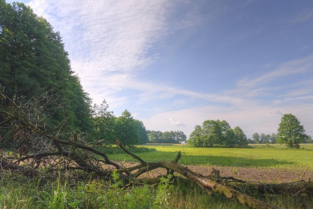 sonniger Augenblick in der Lüneburger Heide