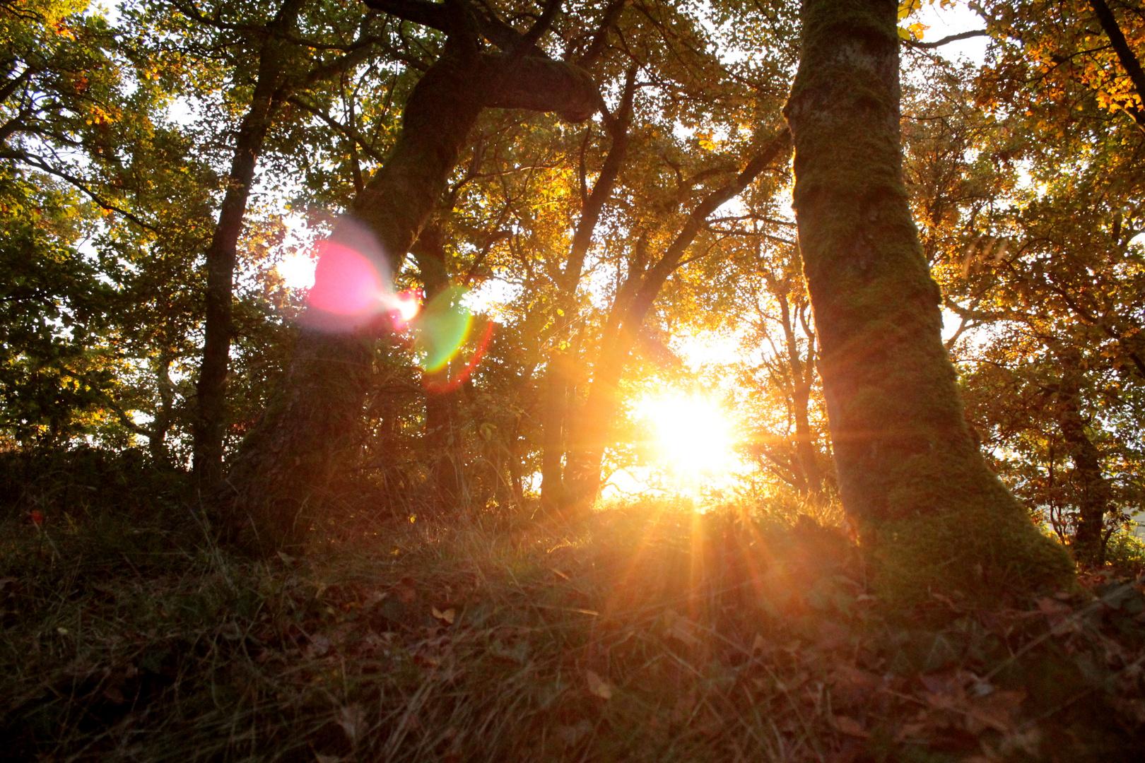 Sonniger Herbst im Wald