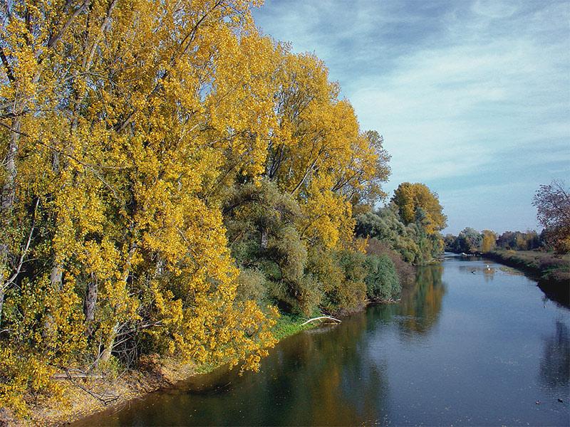 . . . sonniger Herbsttag am Altrhein - Kühkopf