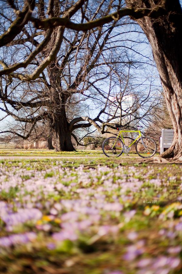 Sonniger Winter... Frühlingstag