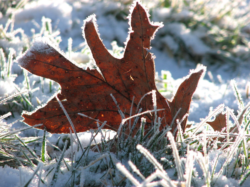 Sonniges Herbstlaub im Winter