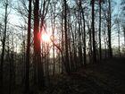 Sonnne im Wald